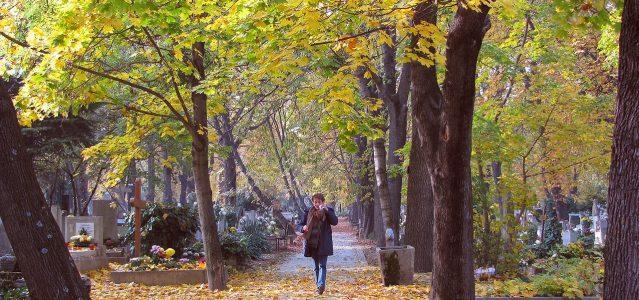 lady walking in fall leaves