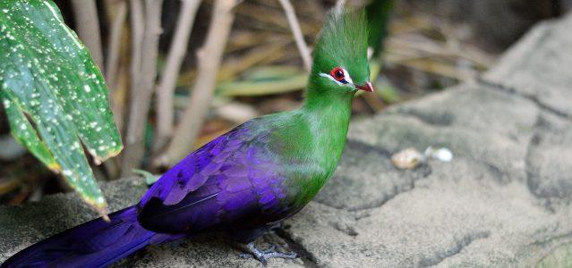green and purple exotic bird